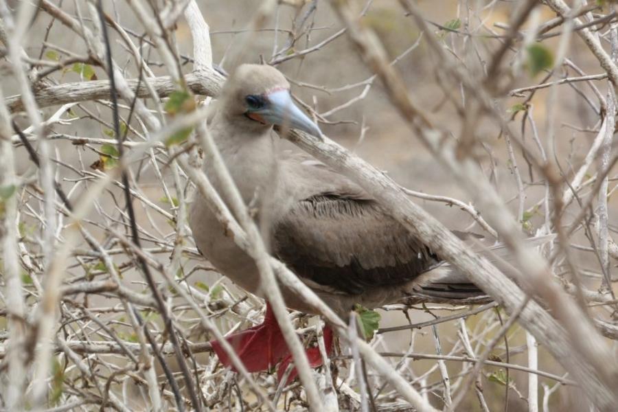 Galápagos: ein Traum wird wahr | Travel-Dvootes.de